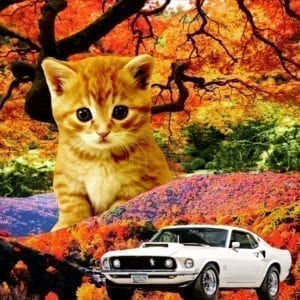 Kitten and Mustang Car