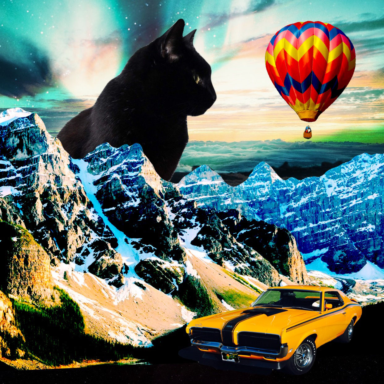 black cat and muscle car